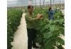 Thời của nông nghiệp 4.0