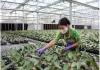 Ứng dụng khoa học và công nghệ trong nông nghiệp: Vẫn chậm đổi mới