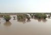 Đất & Người Nam Định: Ấn tượng Ramsa Xuân Thủy