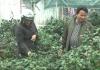 Phóng sự: Những vườn hoa bạc triệu