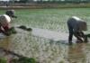 Thời tiết nông vụ ( 06/07/2020 )