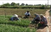 Chuyển động nông thôn (08/06/2020)