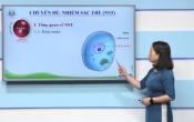 Dạy học trên truyền hình: Ôn tập kiến thức Sinh học 9 - Chuyên đề: Nhiễm sắc thể ( 24/03/2020 )
