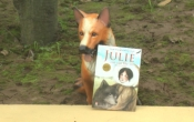 MN1CS: Julie con của bầy sói