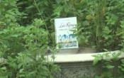 MN1CS: Lạc rừng ngược chiều cái chết