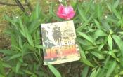 MN1CS: Xin lỗi Việt Nam