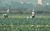 Nhịp cầu nhà nông ( 31/12/2020 )