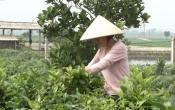 Phụ nữ Việt ( 14/4/2021 )