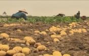 PS Huyện Nam Trực phát triển liên kết sản xuất nông nghiệp hàng hóa