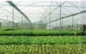 Thời tiết nông vụ ( 09/11/2020 )