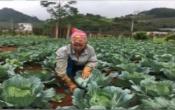 Thời tiết nông vụ ( 10/11/2019 )