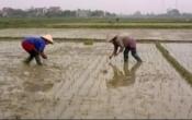 Thời tiết nông vụ ( 15/02/2021 )