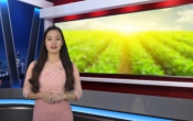 Thời tiết nông vụ ( 25/03/2019 )