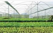 Thời tiết nông vụ ( 25/05/2020 )
