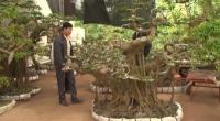 Chợ cây cảnh tại xã Hải Lý huyện Hải Hậu