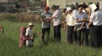 Hội nghị kiểm điểm tiến độ và kết quả thực hiện phòng chống bệnh lùn sọc đen trên lúa Mùa 2018.