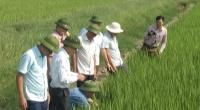 Lãnh đạo tỉnh kiểm tra sản xuất vụ mùa
