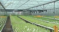 Phát triển sản xuất rau sạch, rau an toàn theo tiêu chuẩn VietGAP trên địa bàn tỉnh.