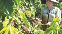 Rộng cửa đầu tư trong nông nghiệp khi hội nhập sâu