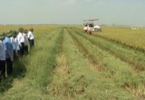 Đồng chí chủ tịch UBND tỉnh kiểm tra tình hình sản xuất vụ Xuân 2018 ở các huyện Mỹ Lộc, Vụ Bản, Ý Yên.