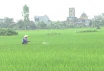 Hiện nay nguồn bệnh lùn sọc đen tồn tại ở rầy, và lúa trên đồng ruộng trên địa bàn tỉnh là khá cao, nhiều khả năng phát sinh và lây lan bệnh lùn sọc đen trong vụ Xuân 2018.