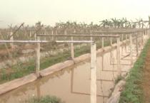 Huyện Xuân Trường tiến hành quy hoạch tổng thể phát triển sản xuất nông nghiệp vùng huyện đến năm 2030, tầm nhìn đến năm 2050.