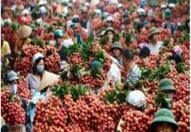 Từ 1/4, hoa quả xuất sang Trung Quốc phải cung cấp thông tin truy xuất