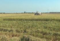 Vụ mùa năm nay, huyện Nam Trực sẽ gieo cấy 8.800ha lúa, 320ha cây màu hè thu, 1.300ha cây vụ đông; phấn đấu hoàn thành gieo cấy xong trước ngày 20/7/2018.