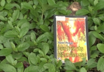 MN1CS:  Hoa trái của niềm đắm say