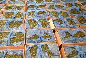 Bộ Công an đề nghị xem 'lá khat' là ma túy
