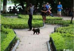 Chó không rọ mõm, chạy rông: Hiểm hoạ tiềm tàng của cả cộng đồng