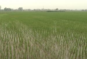 Huyện Mỹ Lộc tăng cường các biện pháp phòng, trừ sâu bệnh hại lúa xuân.