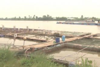 Hội Nông dân tỉnh tổ chức đoàn khảo sát mô hình nuôi cá lồng trên sông ở xã Yên Phúc, huyện Ý Yên.